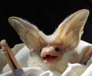 animal, bats, and cute image