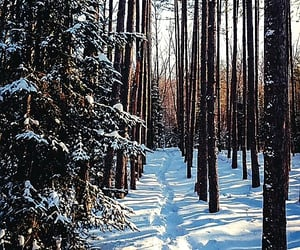 Snowing forest.