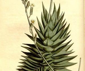 botany, botanical illustration, and #bhlcurtis image