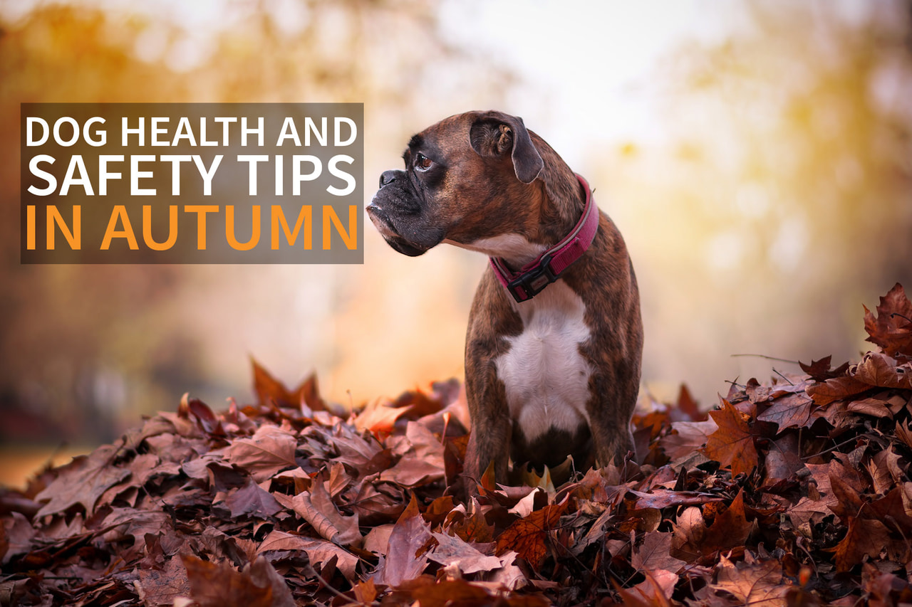 article, dogs, and autumn image