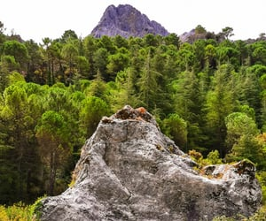 andalucia, forest, and green image