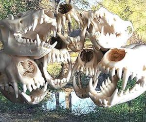aesthetic, alternative, and bones image