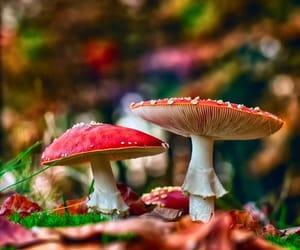 mushroom and nature image