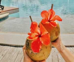coco, hawaii, and places image