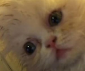 cat, chaotic, and reaction image
