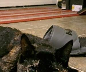 black, brown, and cat image