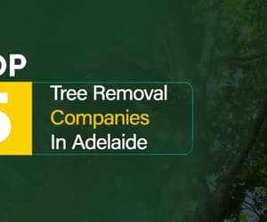 tree removal adelaide and stump removal adelaide image