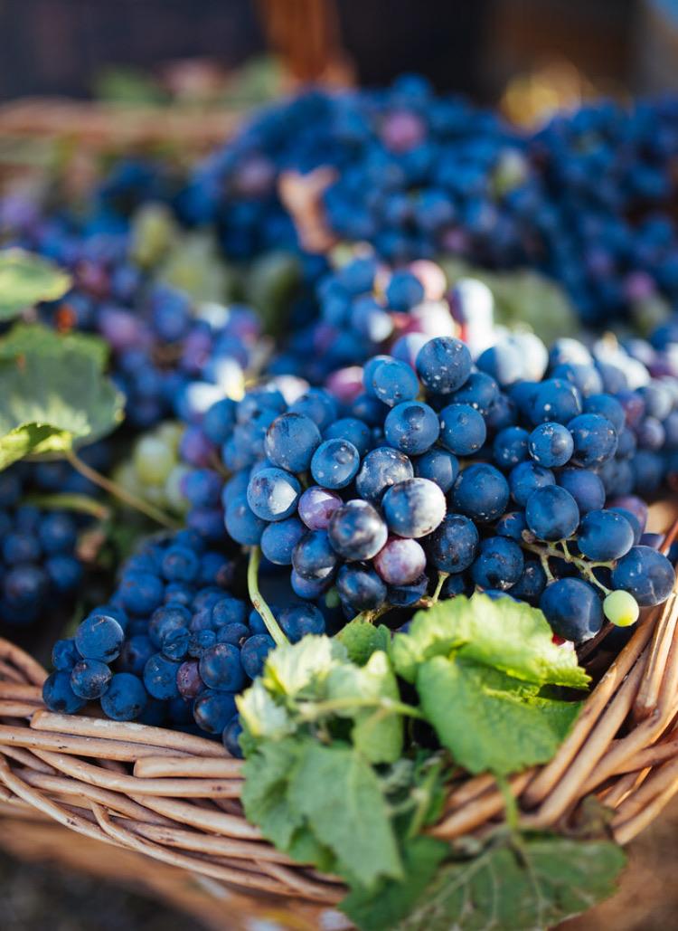 closeup, fruit, and juice image
