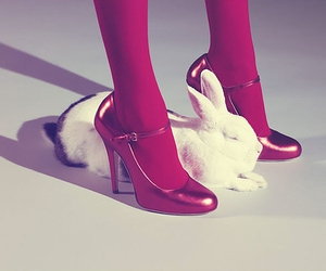 shoes, bunny, and rabbit image