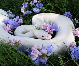 snake, flowers, and animal image