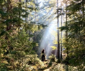 explore, sun, and trees image