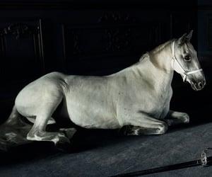 animal, beautiful, and dark image