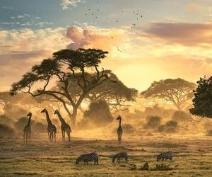 africa, giraffe, and travel image