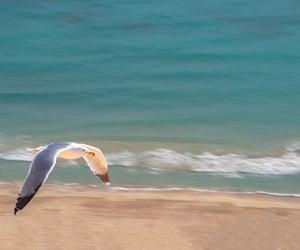 beach, bird, and sea image
