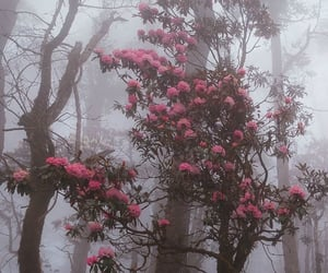 aesthetics, cold, and flowers image