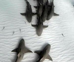 Animales, naturaleza, and mar image