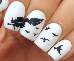 birds, feather, and nails image