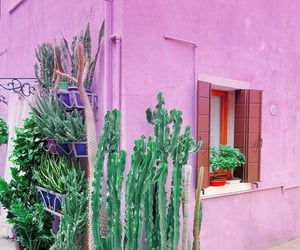 building, cactus, and travel image