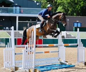 bay, equine, and jump image