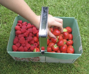 strawberry, aesthetic, and nature image