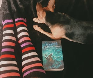 animal, autumn, and book image
