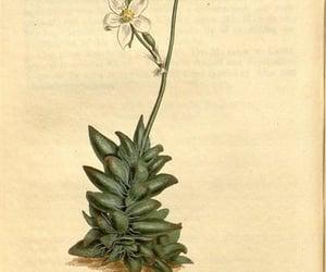 periodicals, botany, and botanical illustration image