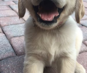 baby, golden retriever, and OMG image