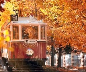 autumn, leaves, and orange image