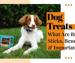 bully sticks image