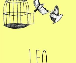 birds, zodiac, and lockscreen image