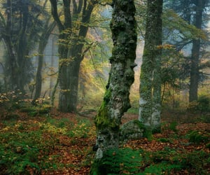MOSSY, nature, and autumn mist image