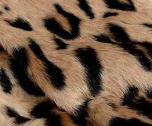 animal, animal print, and natureza image