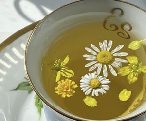 aesthetic, chamomile, and cup image