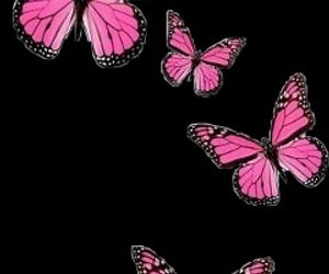 butterfly, overlay, and picsart image