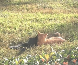 cat, aesthetic, and cottagecore image