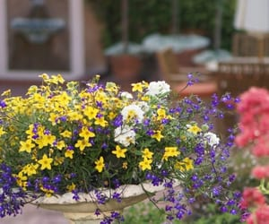 colorful, flowers, and pretty image