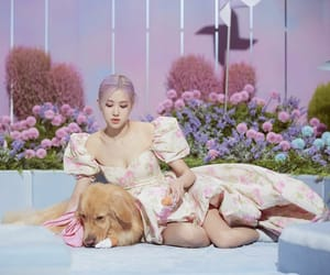 dog, rose, and cover image image