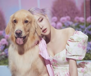 dog, rose, and park chaeyoung image