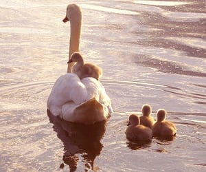adorable, animals, and mom image