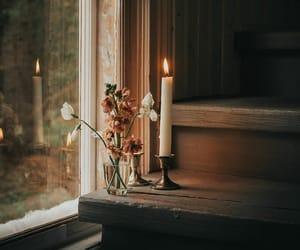 botany, candle, and flower image