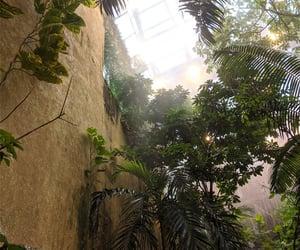 aesthetic, Amazon, and aquarium image