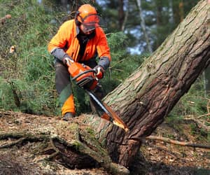 ottawa, toronto, and tree removal image