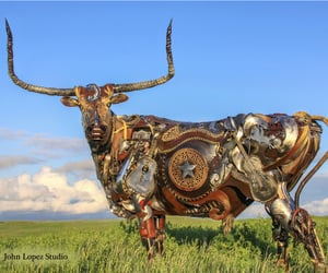 cattle, fiddle, and prairie image