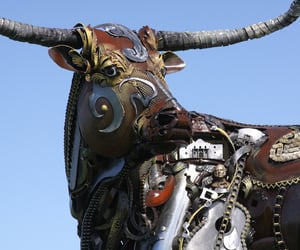 cattle, prairie, and scrap image
