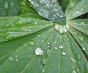 art, drops, and garden image