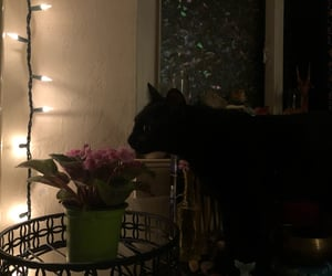 aesthetic, cat, and dark image