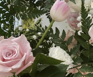 flowers, theme pics, and theme pic image