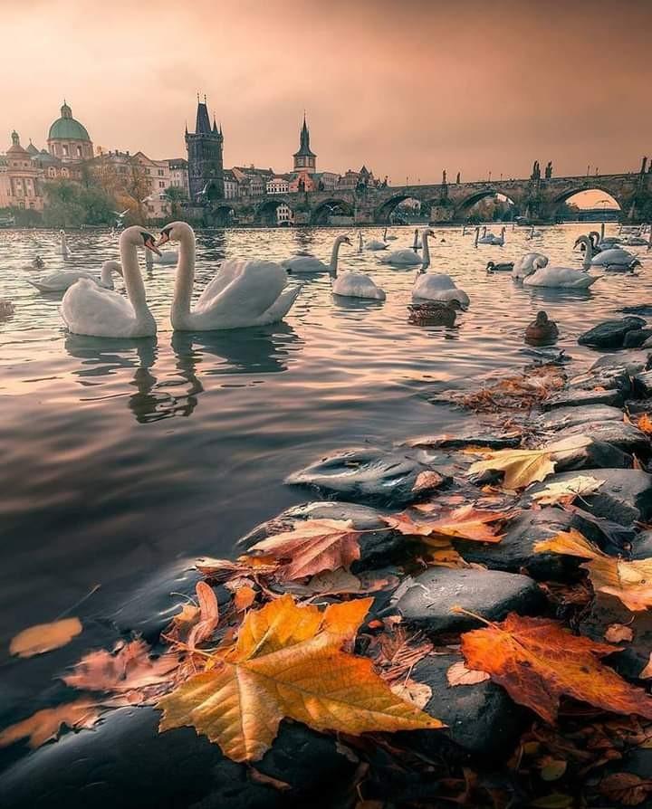 amazing, city, and Dream image