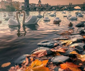 autumn, Swan, and fall image