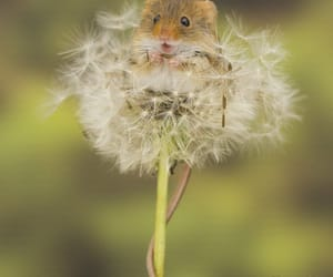 animals, happy, and plants image